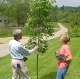 Reaping the Benefits of Existing Tree Cover