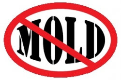 Avoiding Mold in the Cold Season